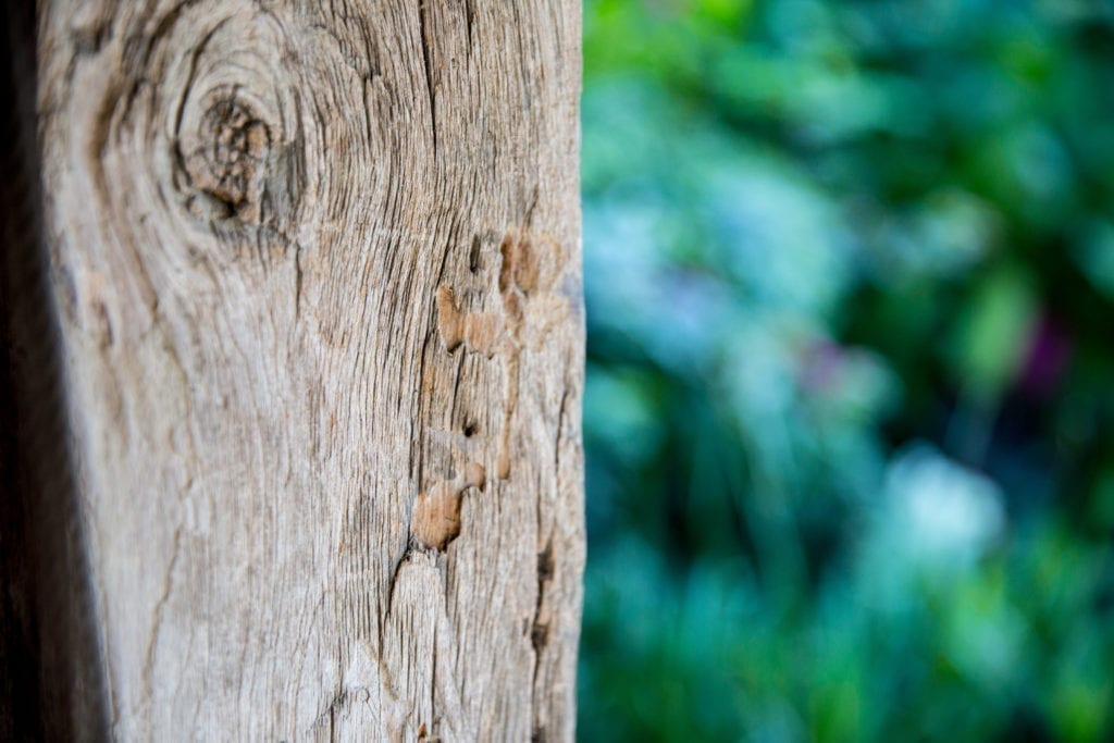 tree bark - natural menopause symptom relief boyne clinic